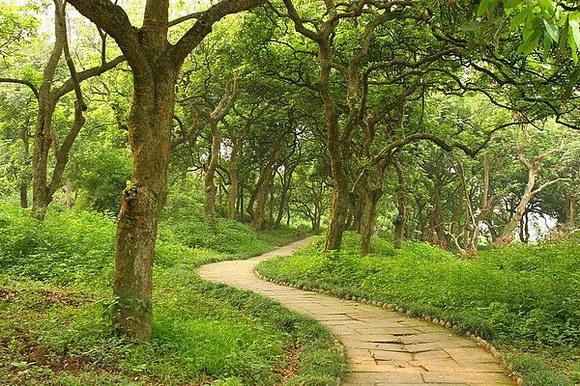 泸州张坝桂圆林风景区-四川青旅成都出发旅游网